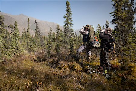 Male bow hunter and young son use binoculars to look for moose amongst Black Spruce, Eklutna Lake area, Chugach State Park, Southcentral Alaska, Autumn Stock Photo - Rights-Managed, Code: 854-03845006