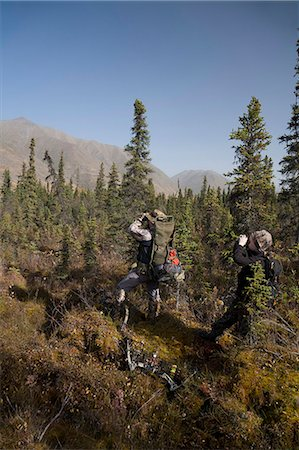 Male bow hunter and young son use binoculars to look for moose amongst Black Spruce, Eklutna Lake area, Chugach State Park, Southcentral Alaska, Autumn Stock Photo - Rights-Managed, Code: 854-03845007