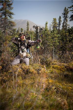 Male bow hunter aims with a compound bow while bow hunting in a Black Spruce forest in the Eklutna Lake area, Chugach Mountains, Chugach State Park, Southcentral Alaska, Autumn Stock Photo - Rights-Managed, Code: 854-03845012