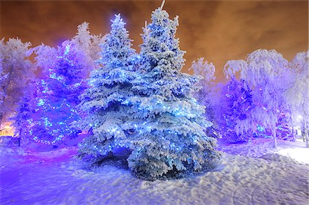 View of frosted Spruce tree covered in blue holiday lights, Anchorage, Southcentral Alaska, Winter, HDR image. Stock Photo - Rights-Managed, Code: 854-03845542