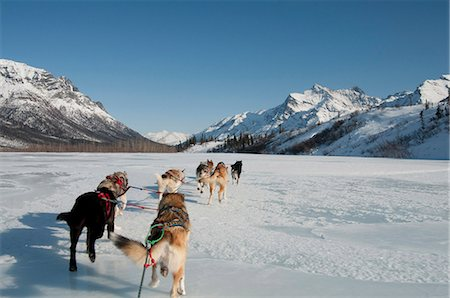 quest - View from the sled while dog mushing up the North Fork of the Koyukuk River in Gates of the Arctic National Park & Preserve. Stock Photo - Rights-Managed, Code: 854-03846012