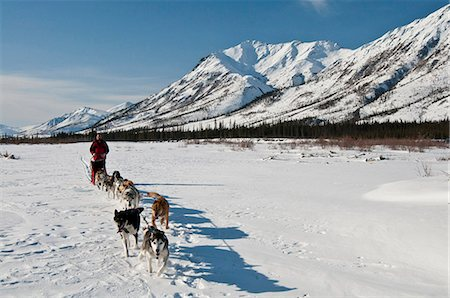 quest - A musher takes his team up the North Fork of the Koyukuk River in Gates of the Arctic National Park & Preserve, Arctic Alaska, Winter Stock Photo - Rights-Managed, Code: 854-03846013