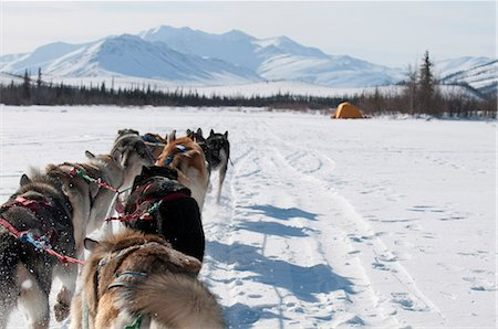 quest - Musher's perspective while mushing back to base camp on the North Fork of the Koyukuk River in Gates of the Arctic National Park & Preserve, Arctic Alaska, Winter Stock Photo - Rights-Managed, Code: 854-03846021