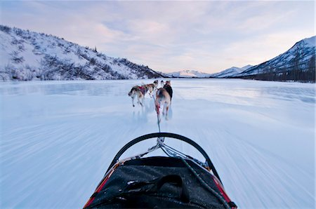 quest - Musher's perspective while mushing down the North Fork of the Koyukuk River in Gates of the Arctic National Park & Preserve, Arctic Alaska, Winter Stock Photo - Rights-Managed, Code: 854-03846022