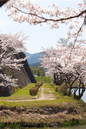 Cherry blossom at ancient castle of Sasayama, Hyogo Prefecture, Japan Stock Photo - Rights-Managed, Code: 855-06022714