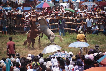 pictures philippine festivals philippines - Bogobo Horsefight Stock Photo - Rights-Managed, Code: 855-02987177