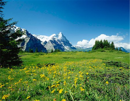snow capped - Alpine meadow with Eiger mountains beyond, Grindelwald, Bern (Berne), Bernese Oberland, Swiss Alps, Switzerland Stock Photo - Rights-Managed, Code: 855-03255184