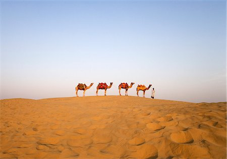 rajasthan camel - Four camels standing in a row with a man, Jaisalmer, Rajasthan, India Stock Photo - Rights-Managed, Code: 857-03192618