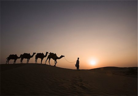 rajasthan camel - Four camels standing in a row with a man, Jaisalmer, Rajasthan, India Stock Photo - Rights-Managed, Code: 857-03192624