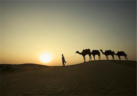 rajasthan camel - Four camels standing in a row with a man, Jaisalmer, Rajasthan, India Stock Photo - Rights-Managed, Code: 857-03192623