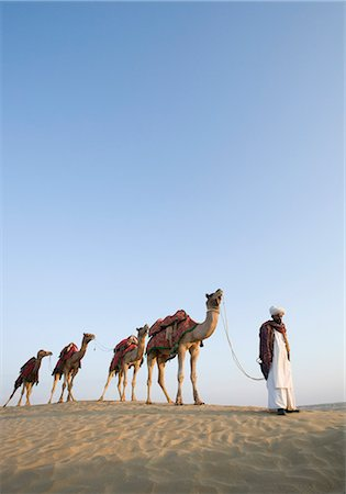 rajasthan camel - Man with camels in a desert, Thar Desert, Jaisalmer, Rajasthan, India Stock Photo - Rights-Managed, Code: 857-03192634