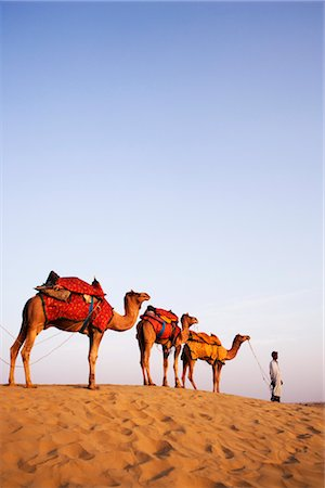Four camels standing in a row with a man in a desert, Jaisalmer, Rajasthan, India Stock Photo - Rights-Managed, Code: 857-03553594