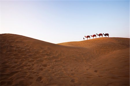 rajasthan camel - Four camels standing in a row with a man in a desert, Jaisalmer, Rajasthan, India Stock Photo - Rights-Managed, Code: 857-03553597
