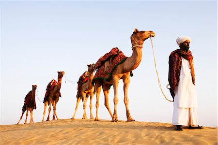 rajasthan camel - Four camels standing in a row with a man in a desert, Jaisalmer, Rajasthan, India Stock Photo - Rights-Managed, Code: 857-03553598