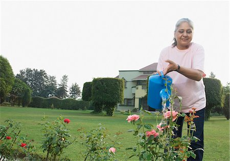 Woman watering rose plants, New Delhi, India Stock Photo - Rights-Managed, Code: 857-03553859