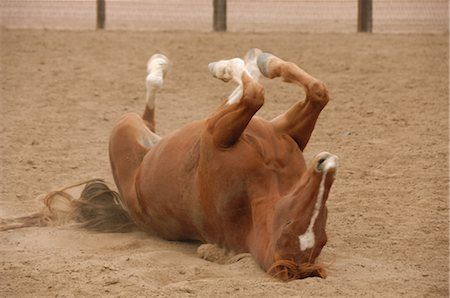 Horse on the Ground Stock Photo - Rights-Managed, Code: 858-03047657