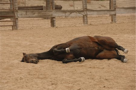 Horse on the Ground Stock Photo - Rights-Managed, Code: 858-03047658