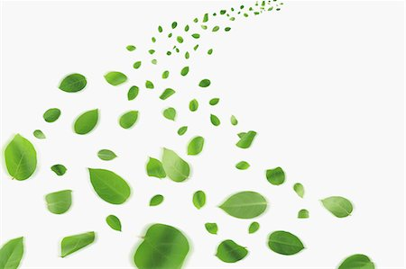 Floating Leaves On White Background Stock Photo - Rights-Managed, Code: 859-06354593