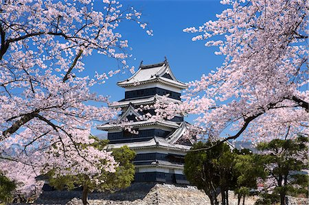 Cherry Blossoms At Matsumoto Castle, Nagano Prefecture, Japan Stock Photo - Rights-Managed, Code: 859-06380159
