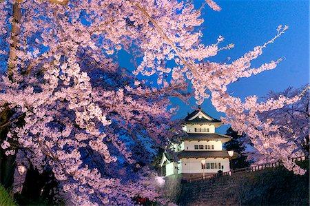 Cherry Blossoms And Hirosaki Castle, Aomori Prefecture, Japan Stock Photo - Rights-Managed, Code: 859-06380164