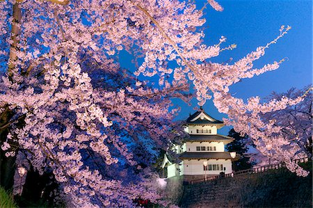 Cherry Blossoms And Hirosaki Castle, Aomori Prefecture, Japan Stock Photo - Rights-Managed, Code: 859-06380164