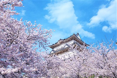 Odawara Castle Cherry Blossoms, Japan Stock Photo - Rights-Managed, Code: 859-06380171