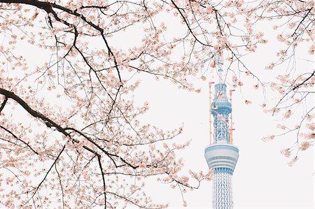 spot (dirt mark) - Tokyo Sky Tree (634M), Tokyo, Japan Stock Photo - Rights-Managed, Code: 859-06380296