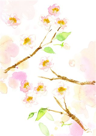 flower illustration - Cherry Blossoms Watercolor Stock Photo - Rights-Managed, Code: 859-06380325
