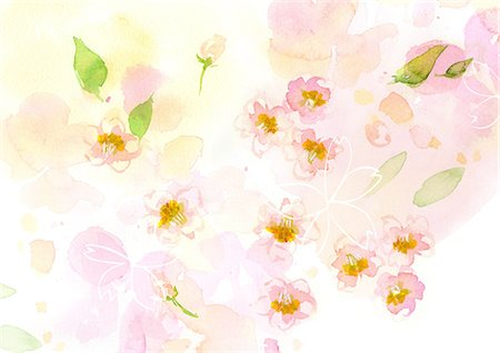 Cherry Blossoms Watercolor Stock Photo - Rights-Managed, Code: 859-06380326