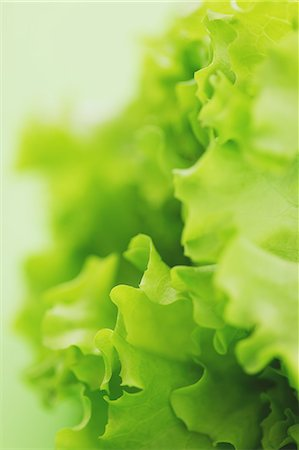 Green lettuce Stock Photo - Rights-Managed, Code: 859-06470063