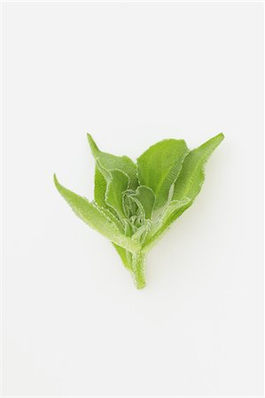delicious - Ice plant Stock Photo - Rights-Managed, Code: 859-06470228