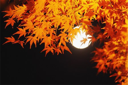 fantastically - Red maple leaves and full moon Stock Photo - Rights-Managed, Code: 859-06710964
