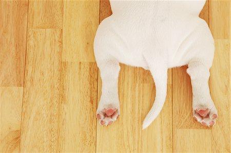 Dog bottom Stock Photo - Rights-Managed, Code: 859-06725073