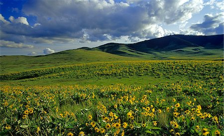Montana, America Stock Photo - Rights-Managed, Code: 859-07149752