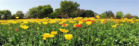 spring - Showa Memorial Park, Tokyo, Japan Stock Photo - Rights-Managed, Code: 859-07149766