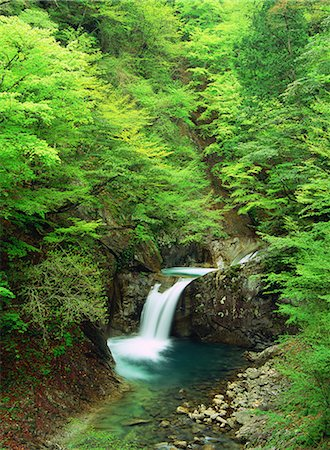 forest - Ryujin Falls, Yamanashi, Japan Stock Photo - Rights-Managed, Code: 859-07150385