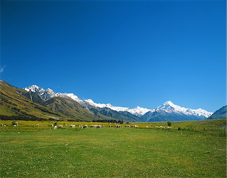 Sheep herd, New Zealand Stock Photo - Rights-Managed, Code: 859-07310688