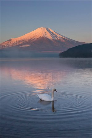 Swan, Japan Stock Photo - Rights-Managed, Code: 859-07310849