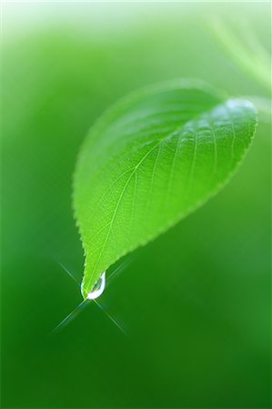 spring background - Green leaf Stock Photo - Rights-Managed, Code: 859-07356547