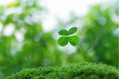 foliage - Clover Stock Photo - Rights-Managed, Code: 859-07356548