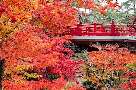 Autumn leaves and bridge Stock Photo - Rights-Managed, Code: 859-07441564