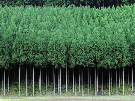 forestry - Kyoto, Japan Stock Photo - Rights-Managed, Code: 859-07441673