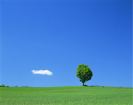 Tree on grassland Stock Photo - Rights-Managed, Code: 859-07441977