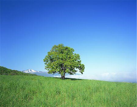Tree on grassland Stock Photo - Rights-Managed, Code: 859-07441985