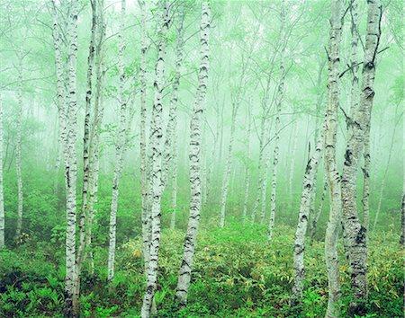 fantastically - Nagano Prefecture, Japan Stock Photo - Rights-Managed, Code: 859-07442041
