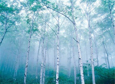 fantastically - Nagano Prefecture, Japan Stock Photo - Rights-Managed, Code: 859-07442099