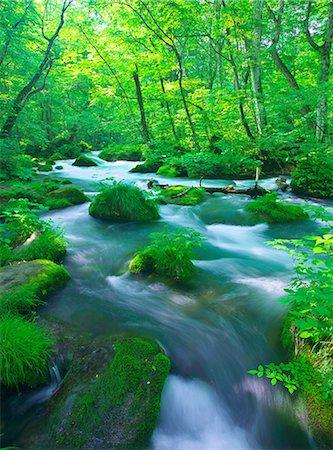 stream - Oirase mountain stream, Aomori Prefecture Stock Photo - Rights-Managed, Code: 859-07442165