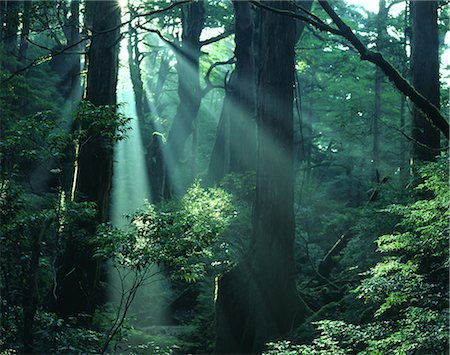 forest - Yakushima Island, Kagoshima Prefecture Stock Photo - Rights-Managed, Code: 859-07442331