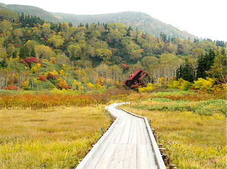 road landscape - Autumn colors Stock Photo - Rights-Managed, Code: 859-07495129