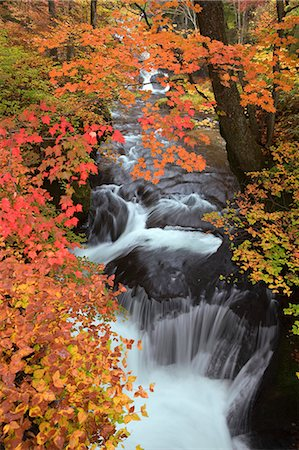 Autumn leaves and water stream Stock Photo - Rights-Managed, Code: 859-07495221